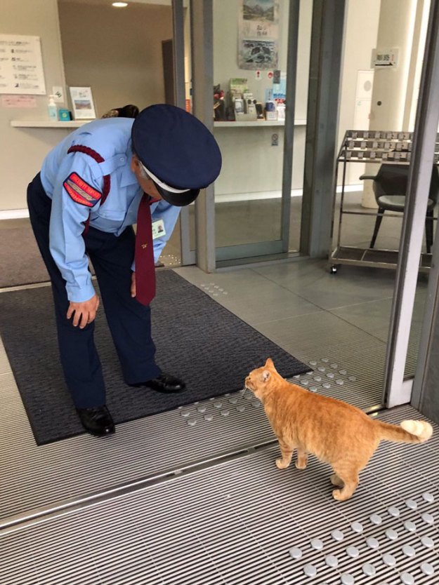 8-5bee74feec2c1__700 Two Cats In Japan Have Been Trying To Sneak Into A Museum For Years (30 Pics) Design Random