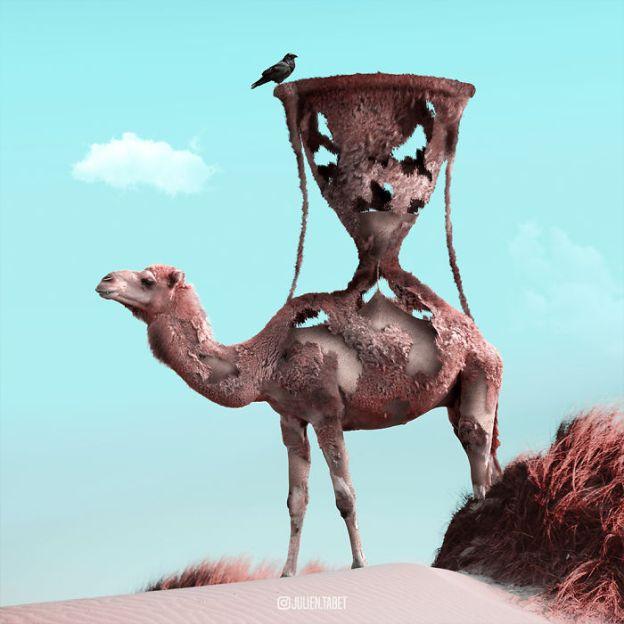 Camel-5bdb8e8f7c7d2__700 Here's How I Imagine Animals Behave When You Aren't Looking (10+ Pics) Design Random