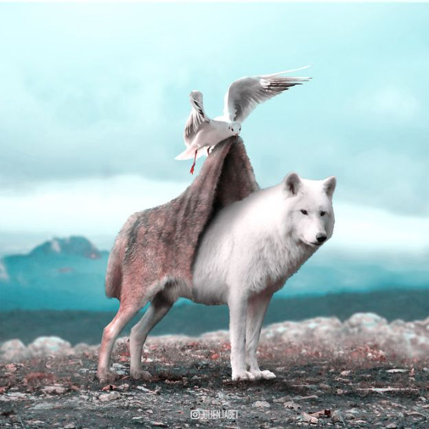 Wolf-5bdb8e2feebe5__700 Here's How I Imagine Animals Behave When You Aren't Looking (10+ Pics) Design Random