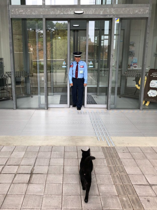 cats-sneaking-security-ken-chan-gosaku-hiroshima-onomichi-city-museum-of-art-5bee84780e708__700 Two Cats In Japan Have Been Trying To Sneak Into A Museum For Years (30 Pics) Design Random