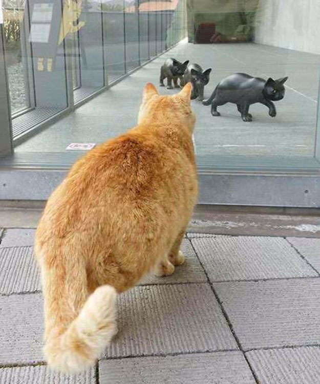 cats-sneaking-security-ken-chan-gosaku-hiroshima-onomichi-city-museum-of-art-5bee85639e64f__700 Two Cats In Japan Have Been Trying To Sneak Into A Museum For Years (30 Pics) Design Random
