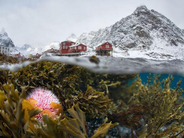 Vistas bajo el agua de Lofoten en invierno (The Beauty Of The Nature)