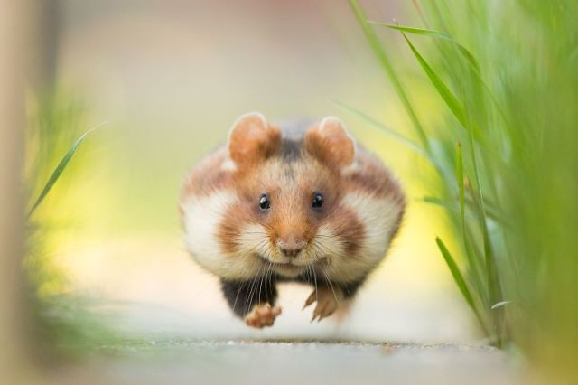 ¡Corre! (Animals In Their Environment)