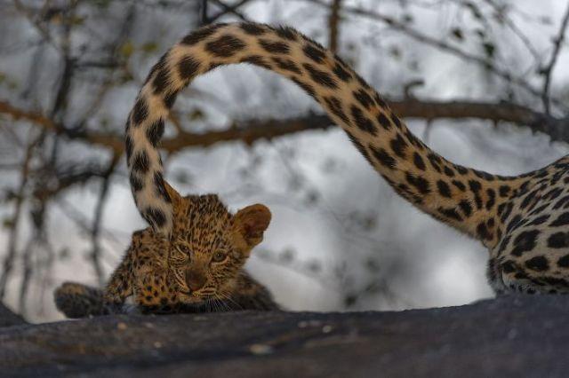 Gatito (Animals In Their Environment)