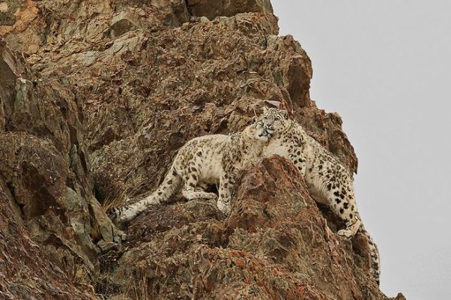 Amor sobre las rocas (Animals In Their Environment)