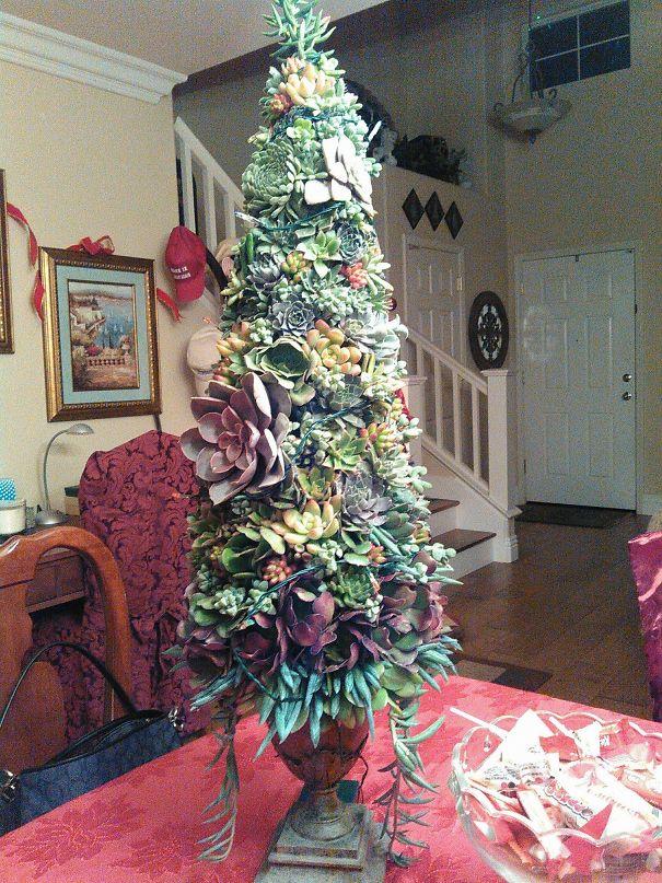 My Living Succulent Christmas Tree