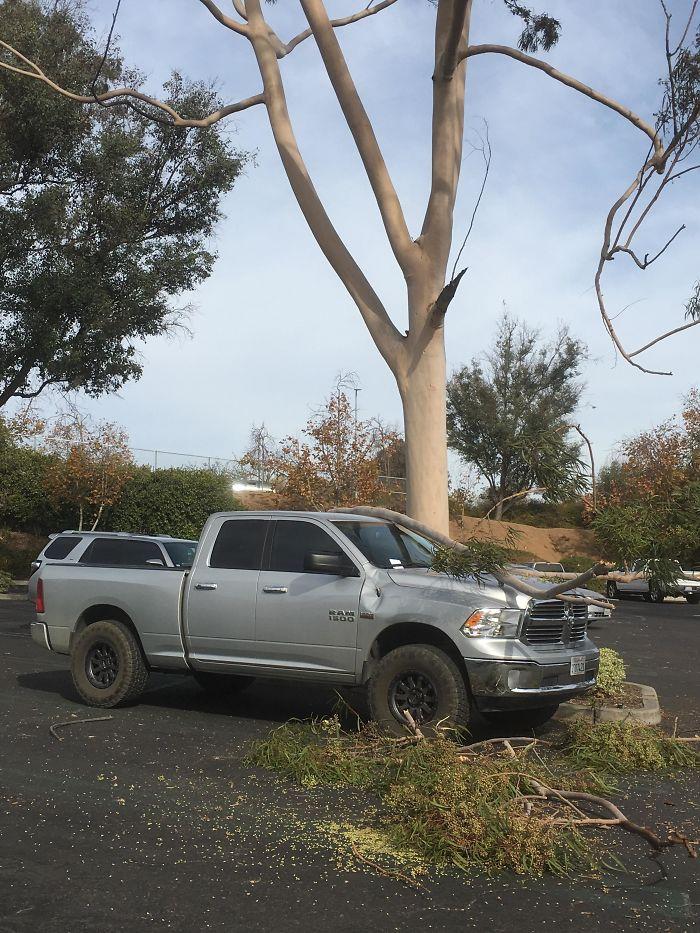 Got A Eucalyptus Tree For Christmas