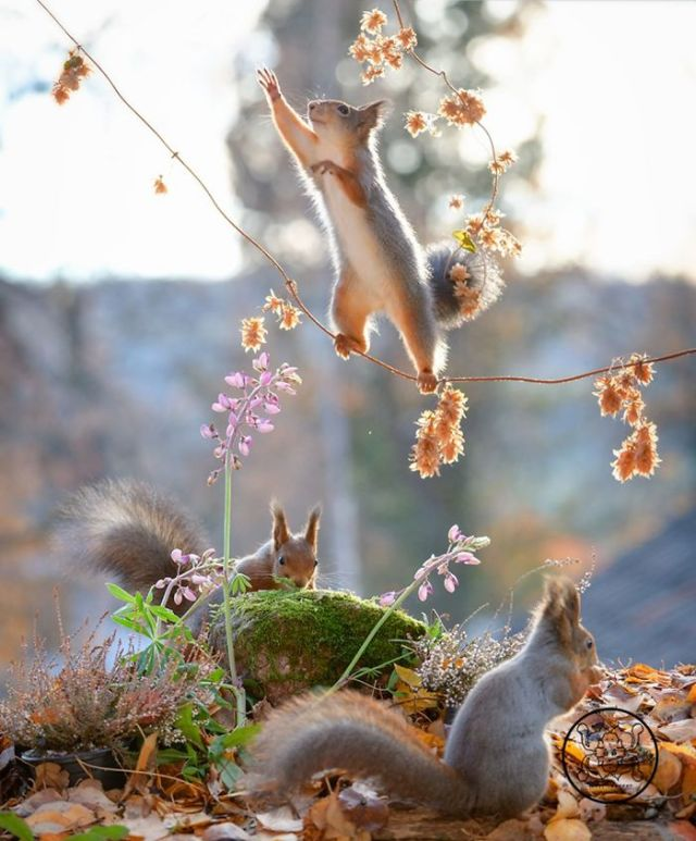 I Followed Squirrels Daily With My Camera For seis Years And Here Are 50 Of My Best Photos