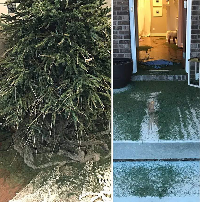 Why The Wife Says We Can No Longer Have A Real Christmas Tree