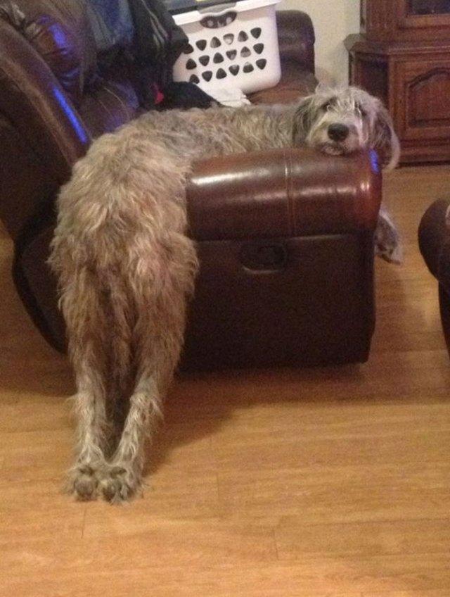 ¿Estás cómodo?