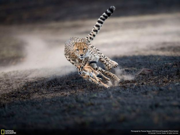 national-geographic-nature-photographer-of-the-year-2018-winner-16-5c0a359e3eb65__880 50 Of The Most Incredible Photos Of The National Geography Photo Contest Of 2018 Design Photography Random