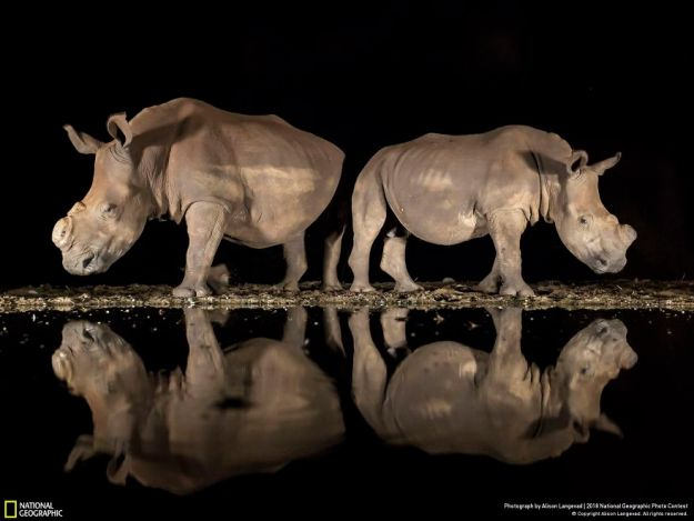 national-geographic-nature-photographer-of-the-year-2018-winner-8-5c0a358ef2ad6__880 50 Of The Most Incredible Photos Of The National Geography Photo Contest Of 2018 Design Photography Random