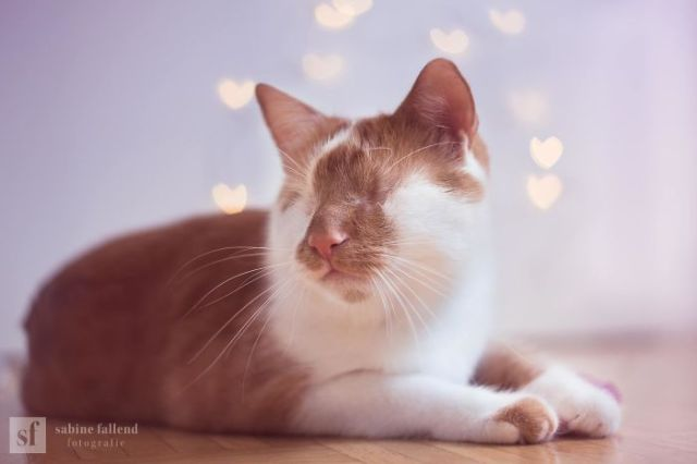 I Photograph My Eyeless Cat Who Sees With His Heart (25 Pics)