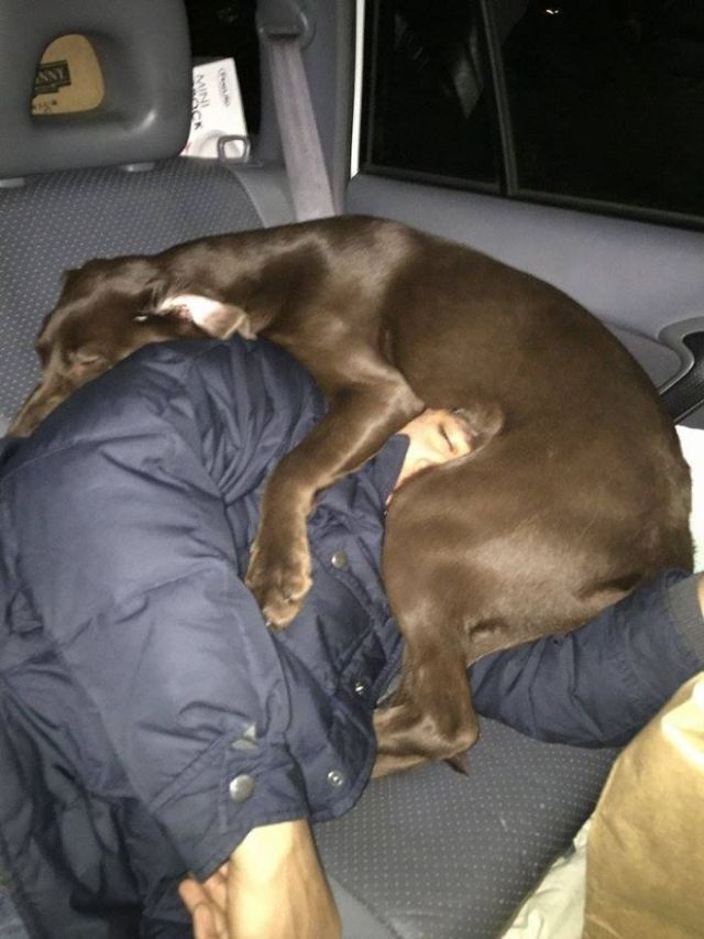 I Pushed My Dog Out Of The Seat So I Could Sleep During A Road-Trip. My Wife Took This Picture While I Slept