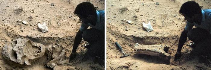 Giant Skeleton Found