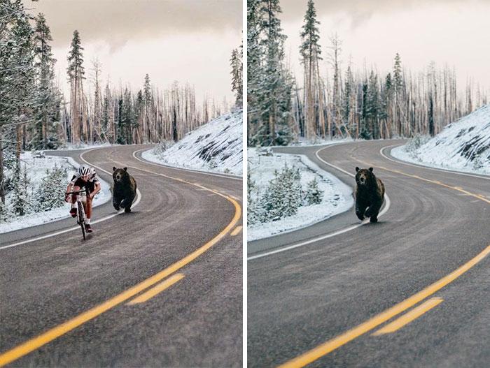 Bear Chasing A Cycler