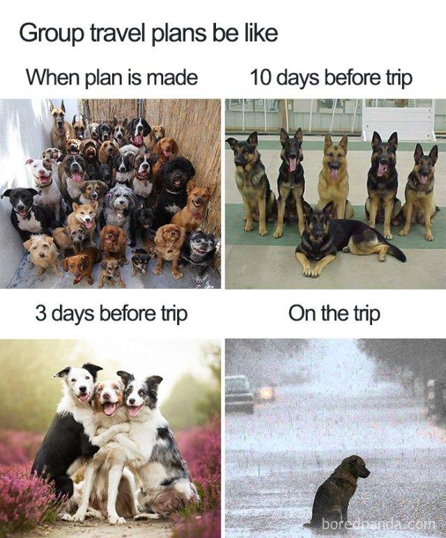 Travel Memes