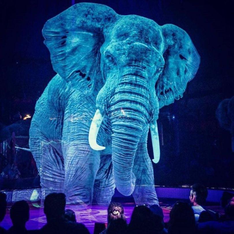 animal holograms circus roncalli germany 4 5cf652bd4d296  700 - Circo alemão usa hologramas em vez de animais vivos