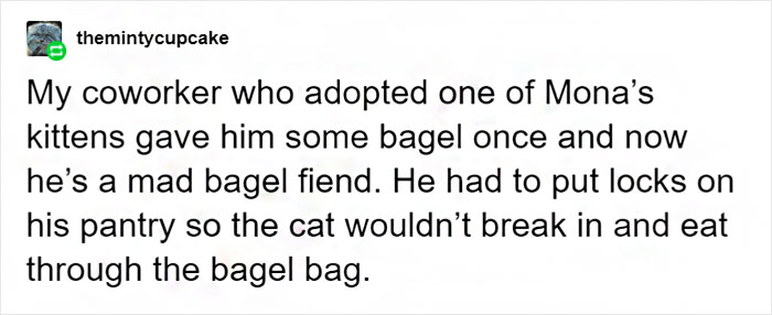 Tumblr User Explain Why Cats Are Obsessed With Eating Bread 9