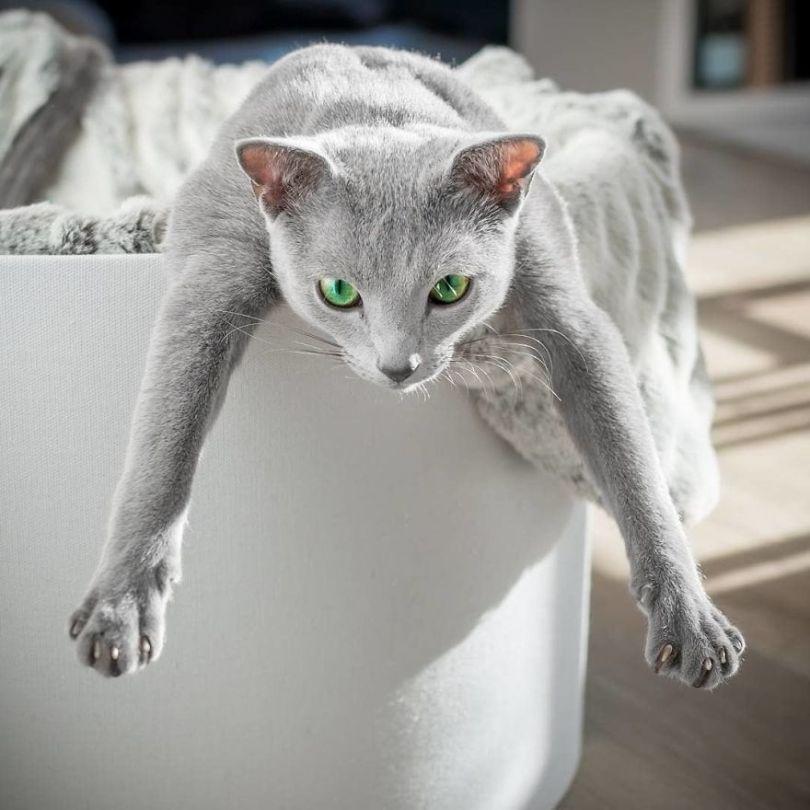 BsI8A5SgqAg png  880 - Olhar felino: Gatos lindos têm olhos hipnotizantes
