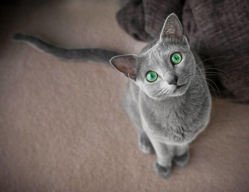 BvE0 pOgkWx png  880 - Olhar felino: Gatos lindos têm olhos hipnotizantes
