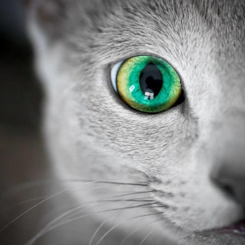 ByIfE3PAErU png  880 - Olhar felino: Gatos lindos têm olhos hipnotizantes