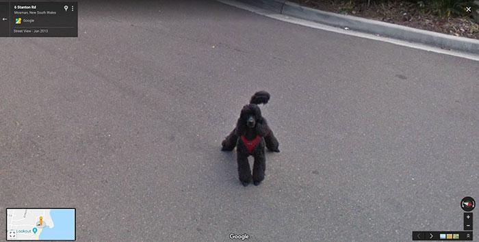 Google-Street-Animals