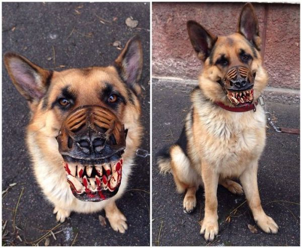 Frightening Novelty Muzzle Transforms Innocent Dogs Into