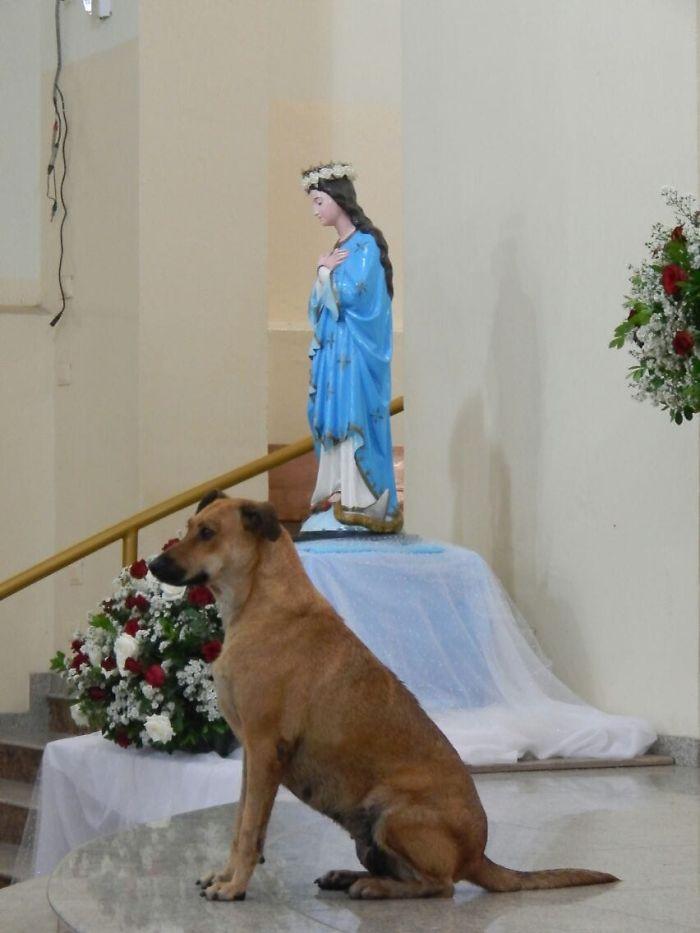 37931405 486466931801774 412439739430338560 o 5daf90157aea3  700 - O que fez o cachorro ao ver a porta da igreja aberta?