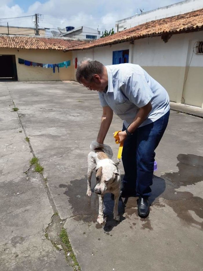 Brazilian priest welcomes stray dogs inside church to be adopted 5dafb863135d2 jpeg  700 - O que fez o cachorro ao ver a porta da igreja aberta?