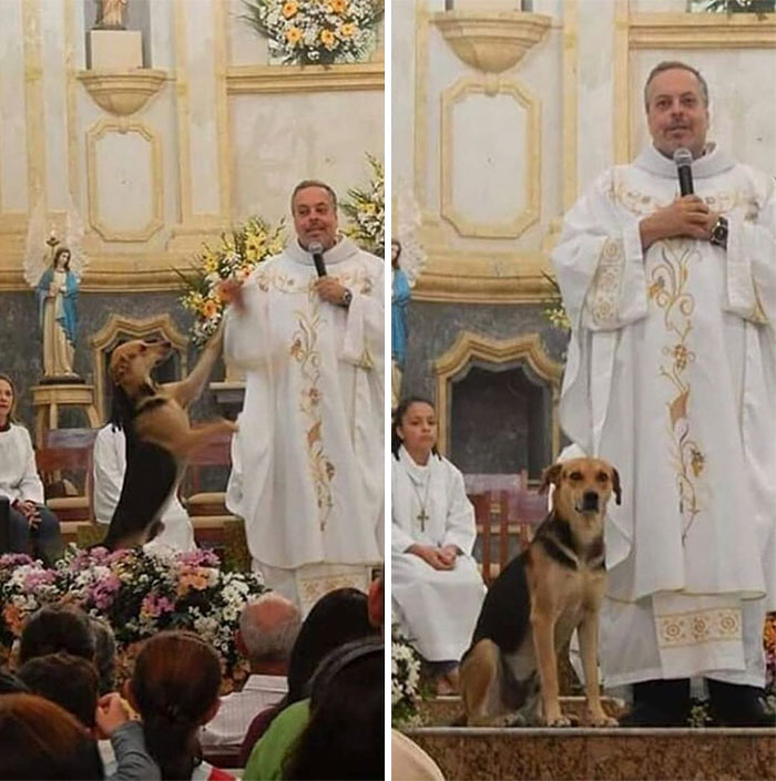Brazilian priest welcomes stray dogs inside church to be adopted 5daffa16d07f5  700 - O que fez o cachorro ao ver a porta da igreja aberta?