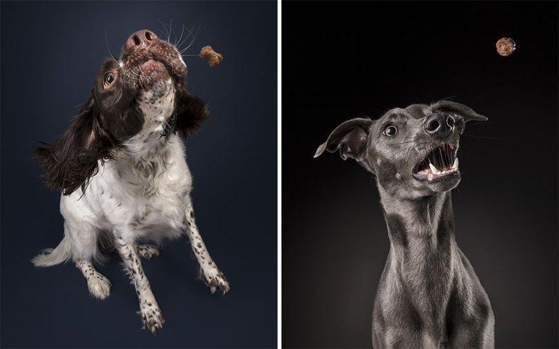 I took a series of photos that captured dogs and their relationship with food 5d9df776d1de3  880 - Fotógrafo de animais de estimação