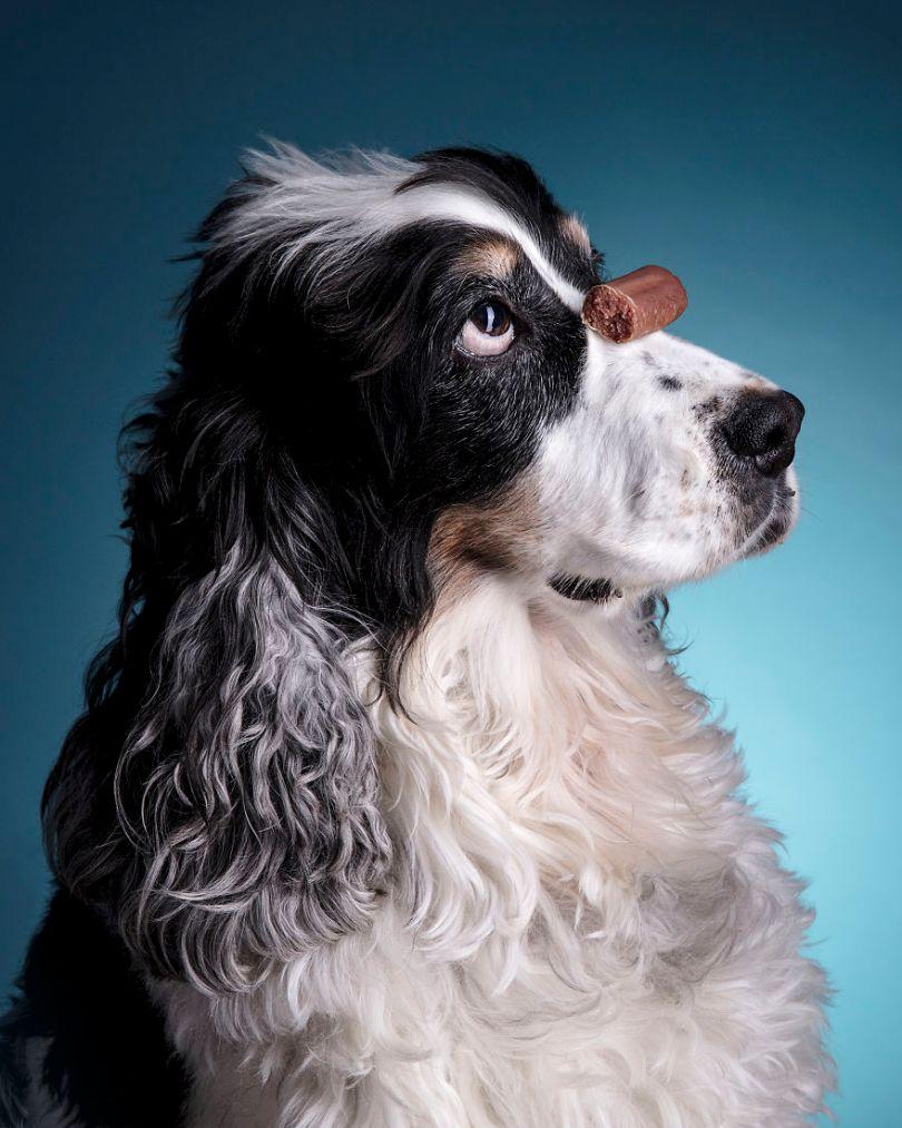 Rhiannon Buckle Pet Photography Dogs 09 5d9cf2856e8e7  880 - Fotógrafo de animais de estimação