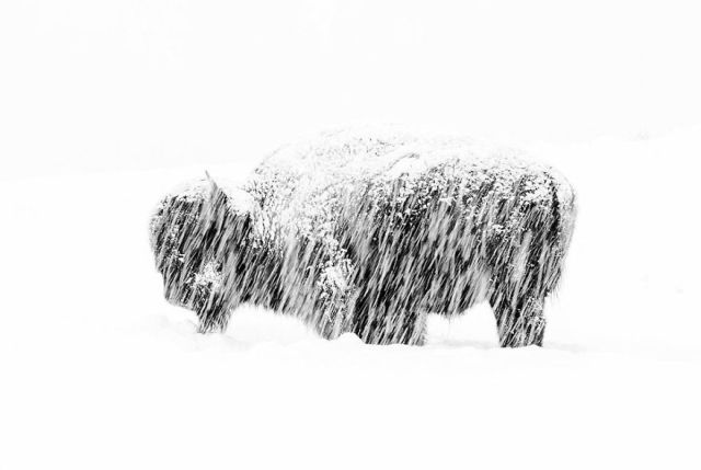 """Snow Exposure"" By Max Waugh, USA, Black And White, Winner 2019"
