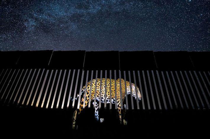 """Another Barred Migrant"" By Alejandro Prieto, Mexico, Wildlife Photojournalism, Winner 2019"