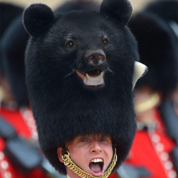 Bear On Guard