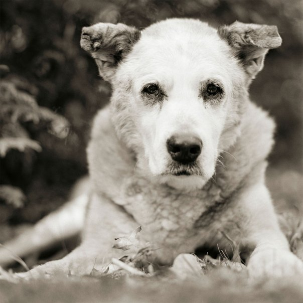 Bumper, Mixed Breed Dog, Age 17