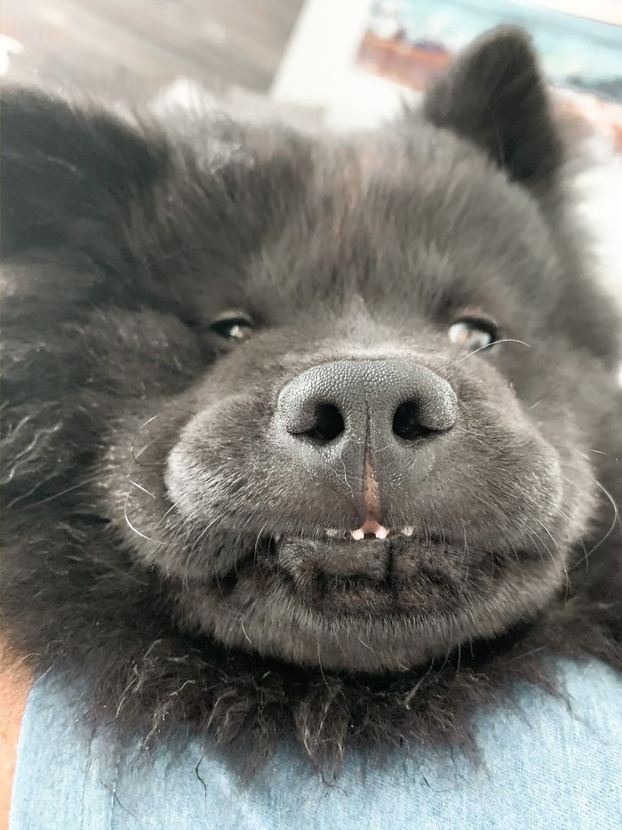 This Online Community Shares The Silliest Dog Photos Where Their Teeth Are Visible In A Funny Way (30 Pics) 32