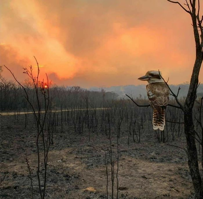 In Australia After A Fire