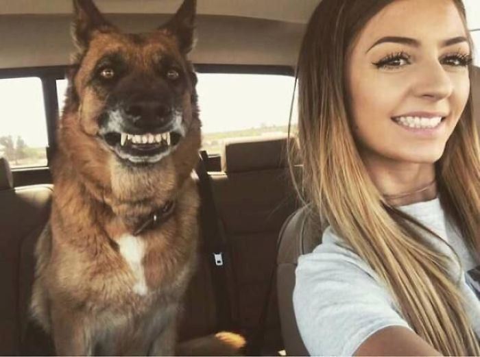 This Online Community Shares The Silliest Dog Photos Where Their Teeth Are Visible In A Funny Way (30 Pics) 9