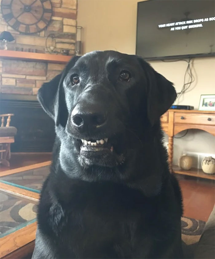 This Online Community Shares The Silliest Dog Photos Where Their Teeth Are Visible In A Funny Way (30 Pics) 21