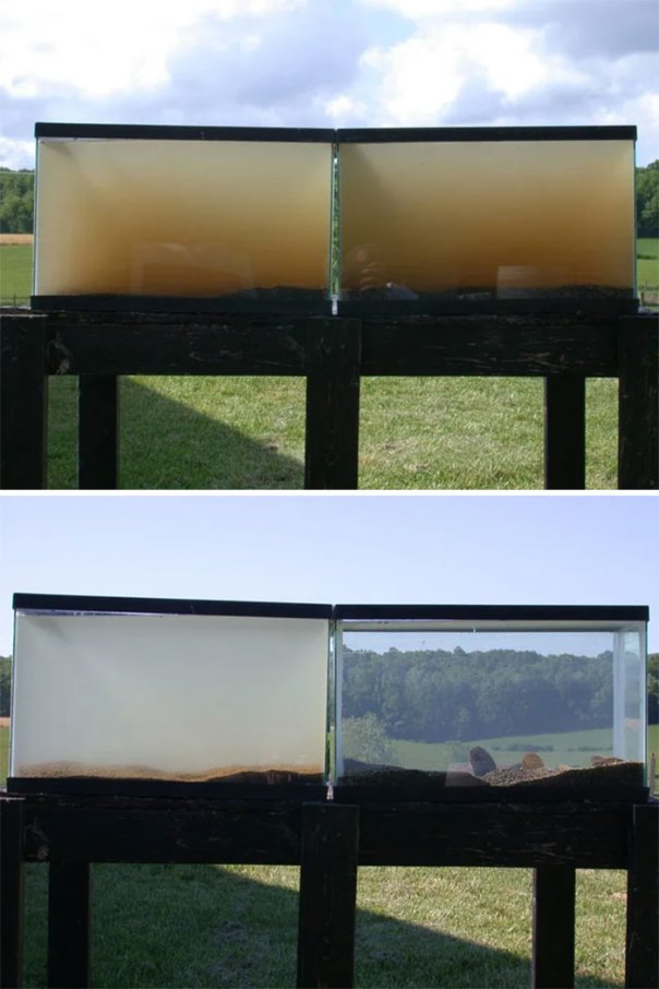 Two Tanks Were Set Up With Water From A Virginia Stream For 24 Hours. The One On The Right Had Mussels In It, The One On The Left Didn't