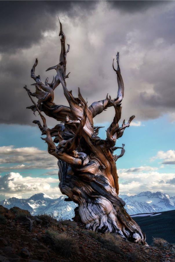 Eastern Sierra, California, USA By Carlos Cuervo