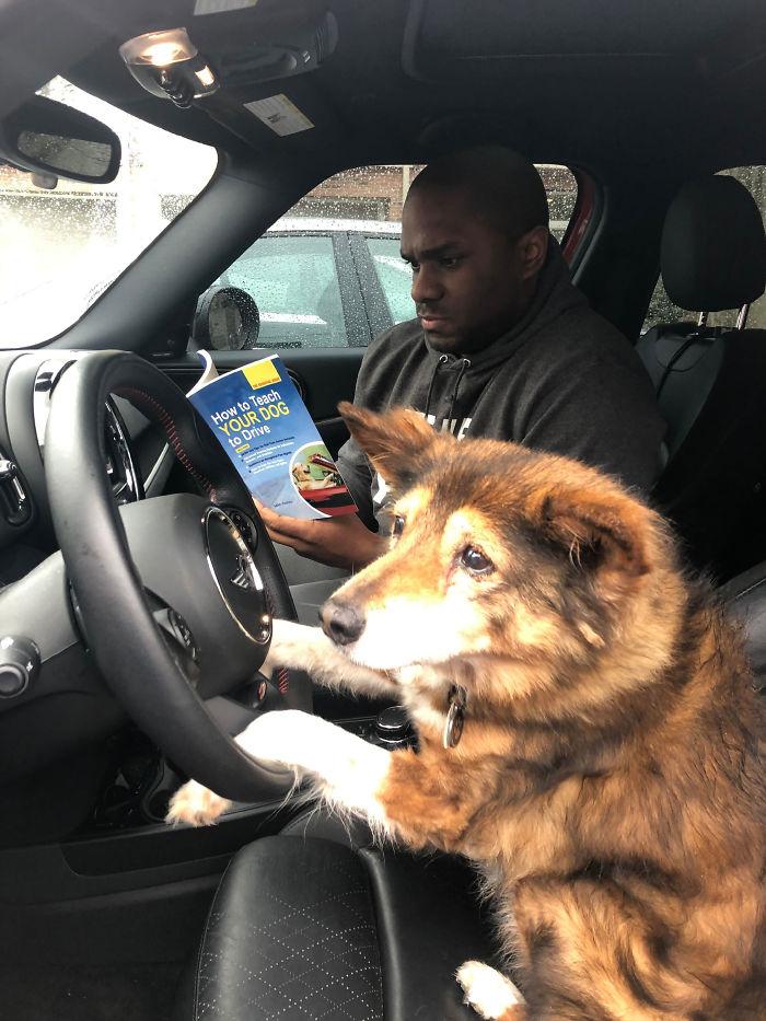 My Dog Is 16, So I Figured It's Time For Some Driving Lessons