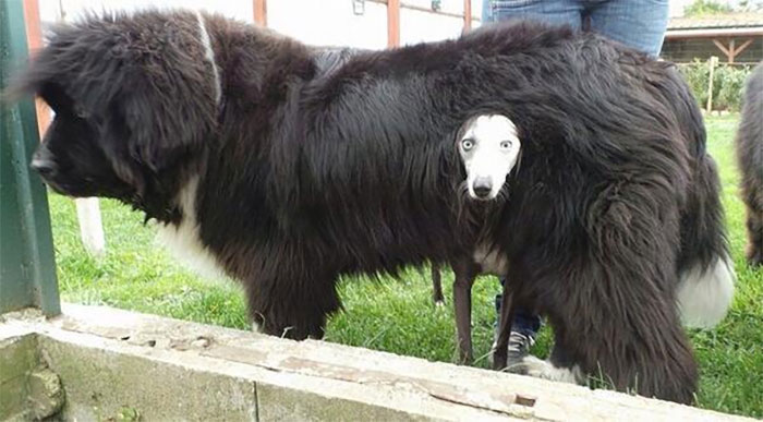 My New Fur Scarf, Isn't It Fabulous?!?!