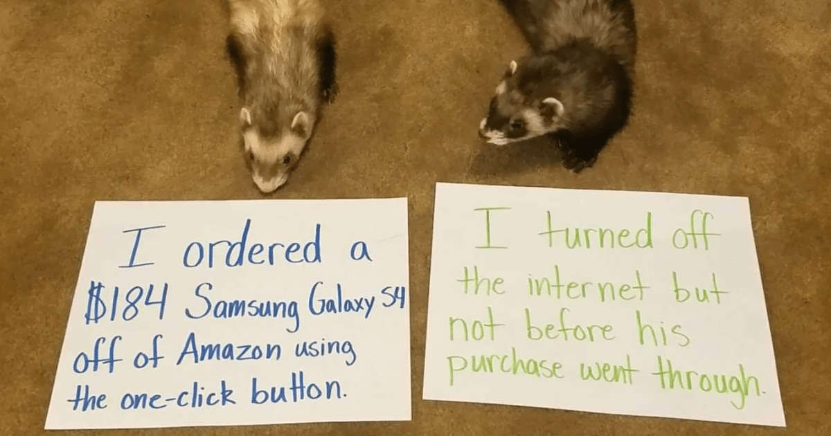 141 Mischievous Pets Being Shamed For Their Crimes