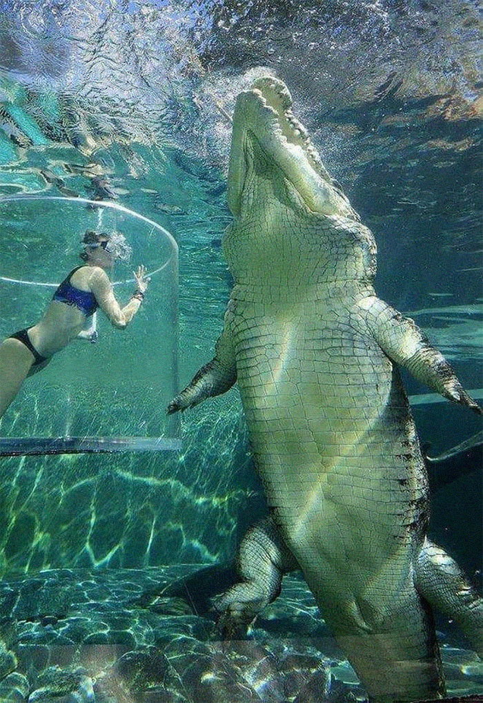 Animals Are Way Bigger Than We Think (Photos) 17