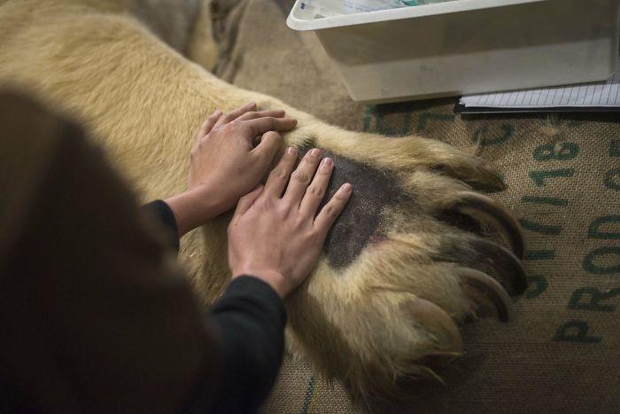 Animals Are Way Bigger Than We Think (Photos) 29