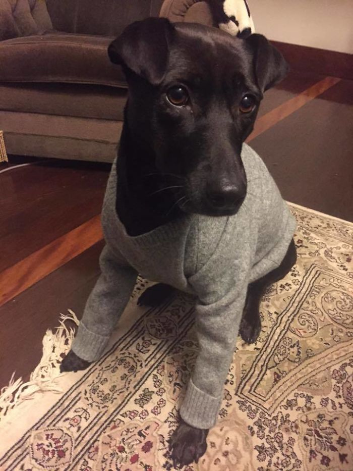I Shrunk My GF's Favourite Sweater, But Her Loss Is Oak's Gain