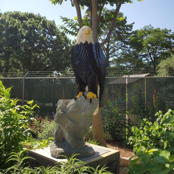 Белоголовый орлан